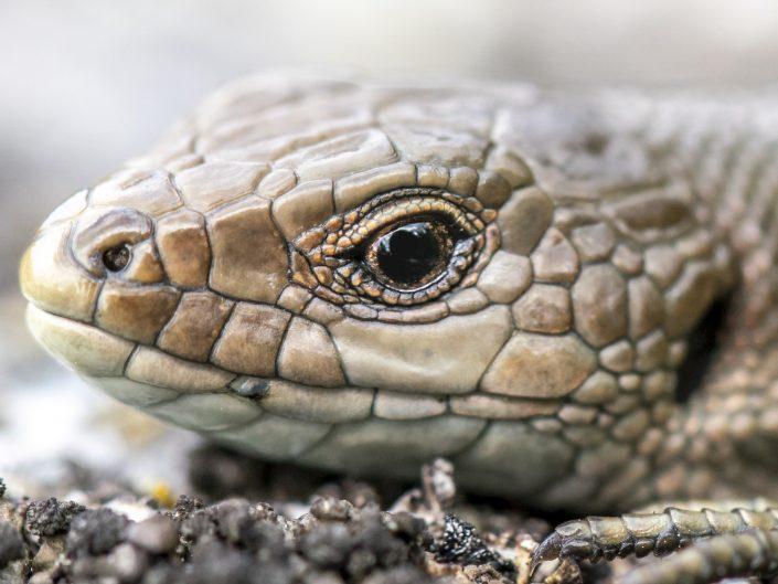 Luonnon pienimmät – Makrokuvaus